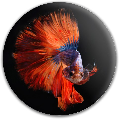 Design #63271 (Animals) Dynamic Discs Fuzion Felon Driver Disc