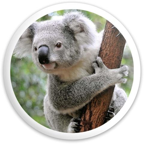 Koala Dynamic Discs Raider Driver Disc
