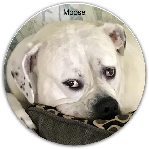 Dog Dynamic Discs EMAC Truth Midrange Disc